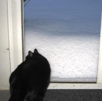 Eddie snow
