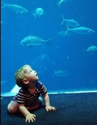 Wyatt-aquarium