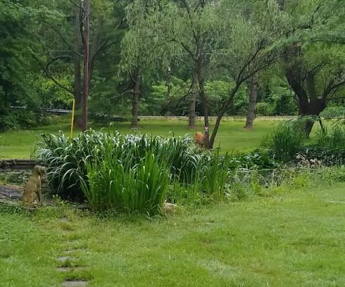 Deer 1 (2)